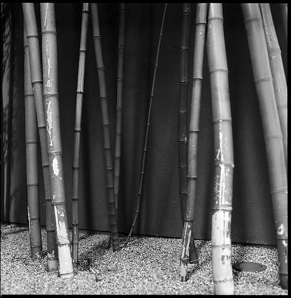 Bamboo II © Dennis Mojado