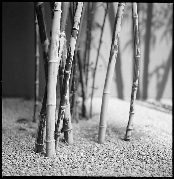 Bamboo I © Dennis Mojado