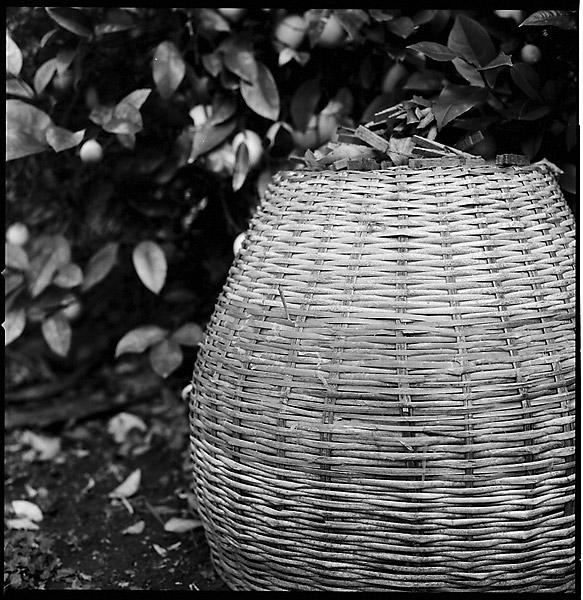 Basket © Dennis Mojado