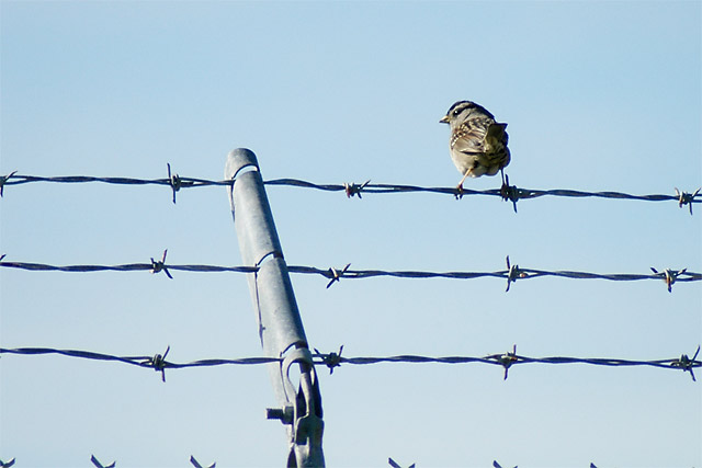 Bird Butt © Dennis Mojado