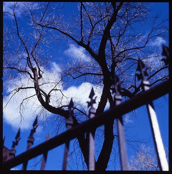 Blue Sky Tree © Dennis Mojado