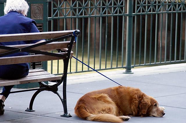 Bored Dog © Dennis Mojado