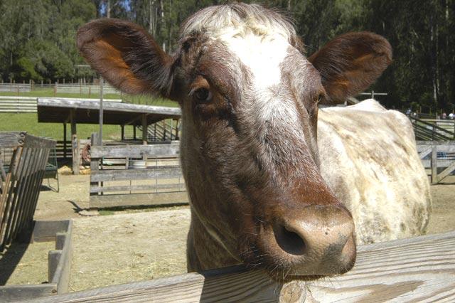 Cow pose © Dennis Mojado