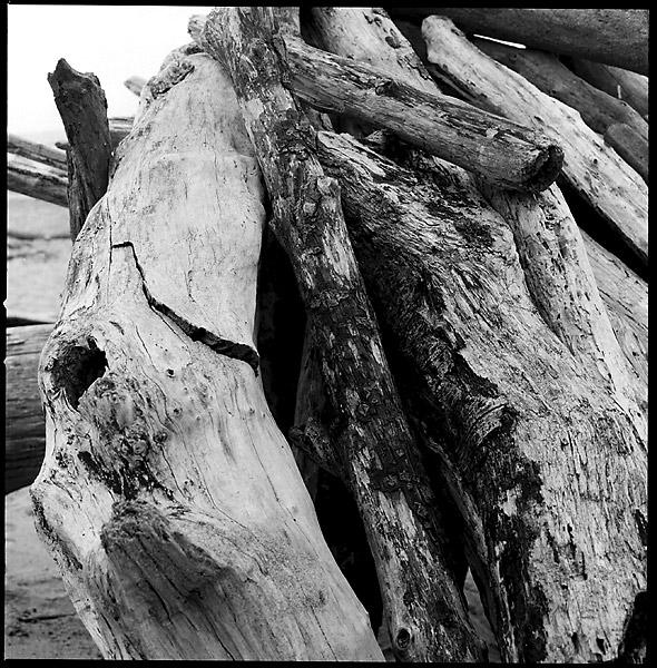 Driftwood Logs © Dennis Mojado