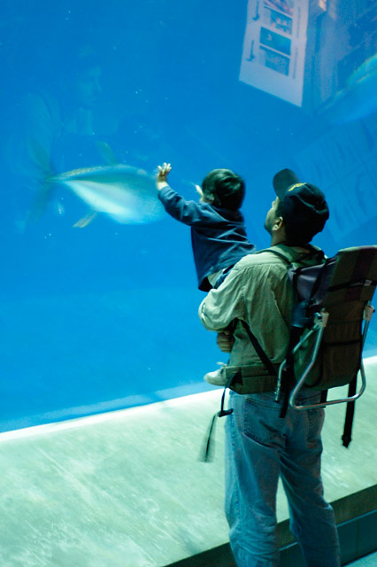 Father, Son, and Tuna © Dennis Mojado