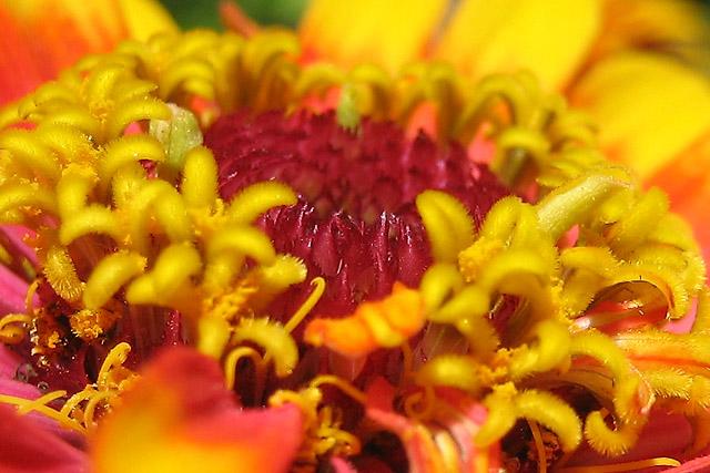 Flower I © Dennis Mojado