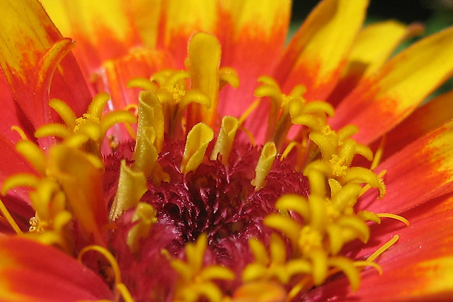 Flower III © Dennis Mojado