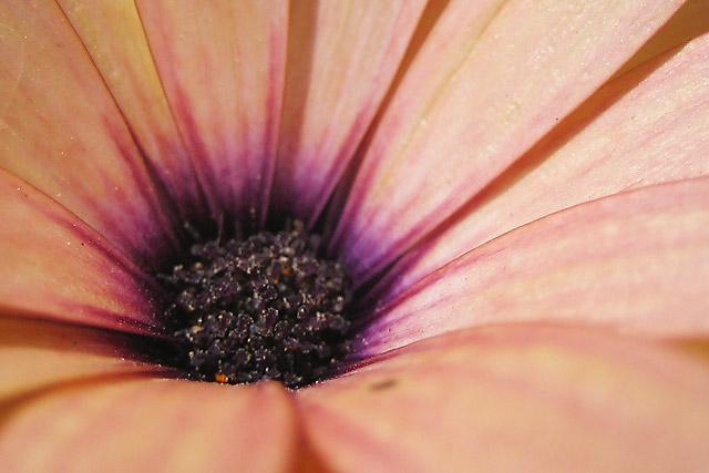 Flower V © Dennis Mojado