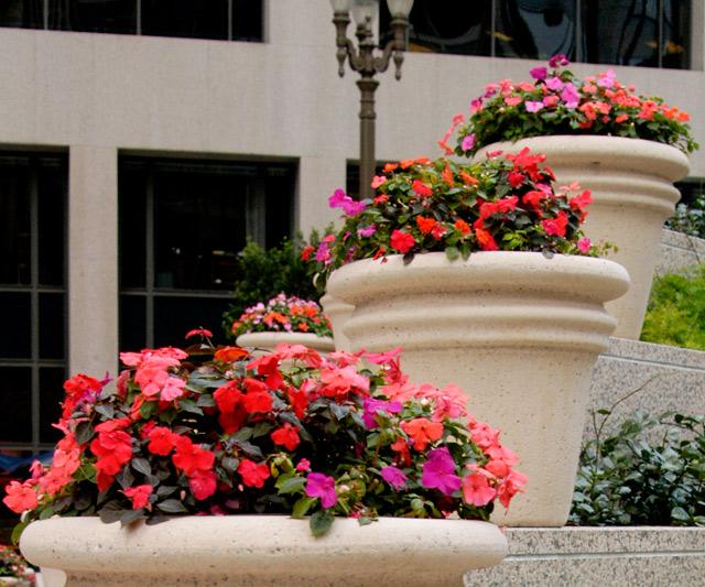 101 Cal Flower Pots © Dennis Mojado