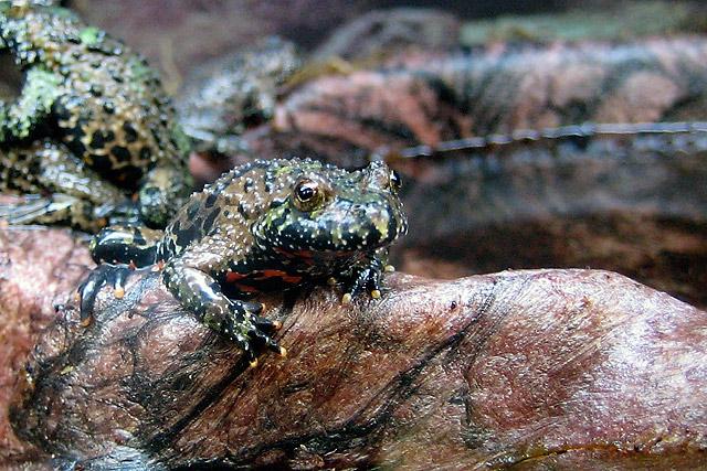 Frogs © Dennis Mojado
