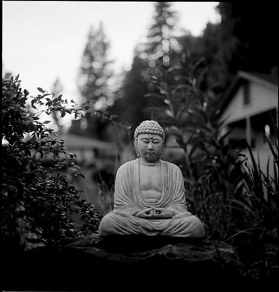 Guerneville Buddha © Dennis Mojado
