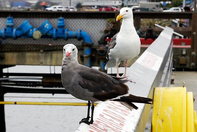 Gulls © Dennis Mojado