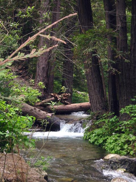 Limekiln Creek © Dennis Mojado
