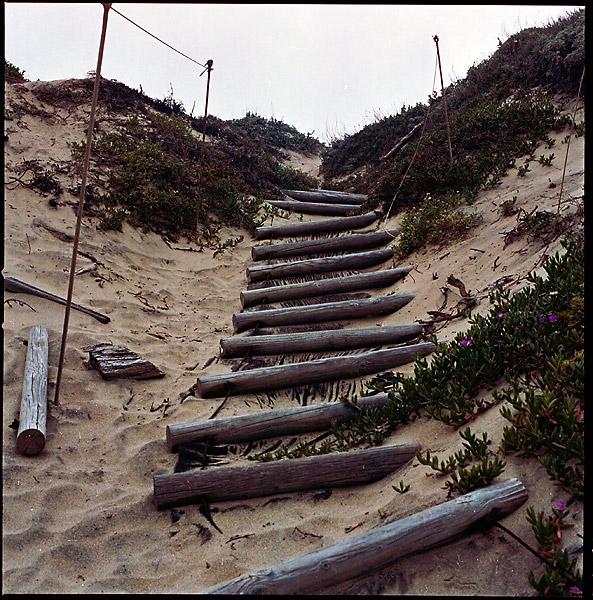 Log Stairs © Dennis Mojado