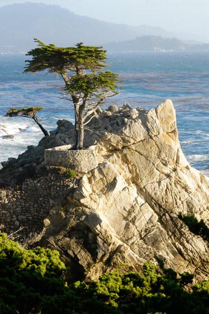 Lone Cypress © Dennis Mojado