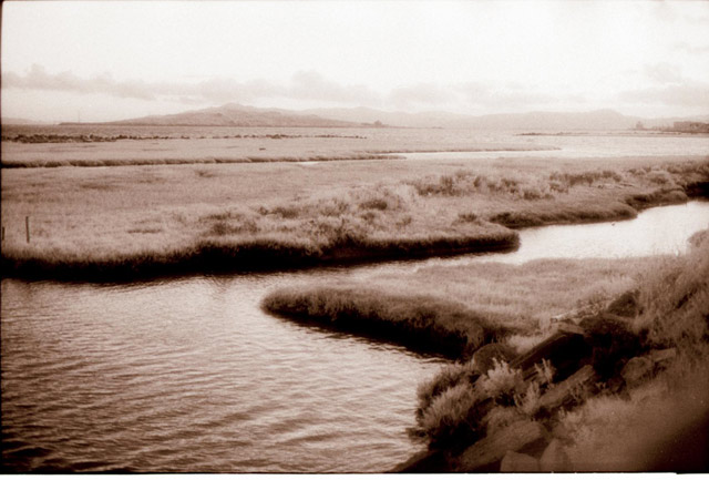 Marsh © Dennis Mojado