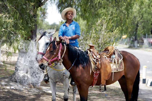 Mexican Horses © Dennis Mojado