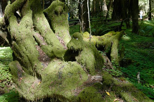 Moss Creature © Dennis Mojado