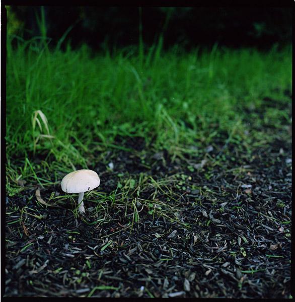 Mushroom © Dennis Mojado