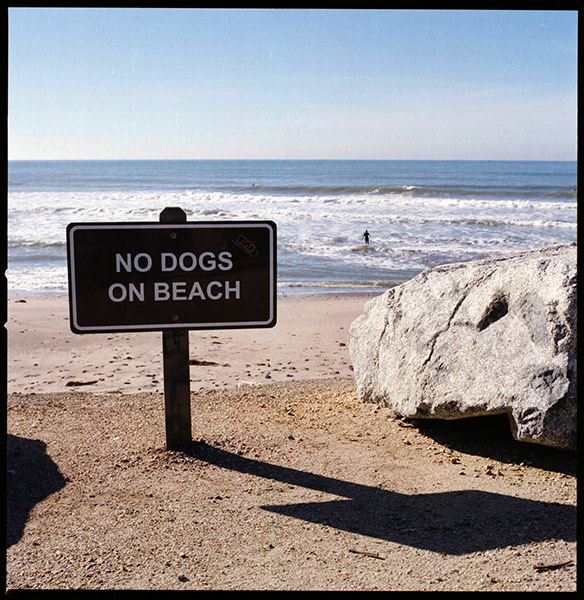 No Dogs on Beach © Dennis Mojado