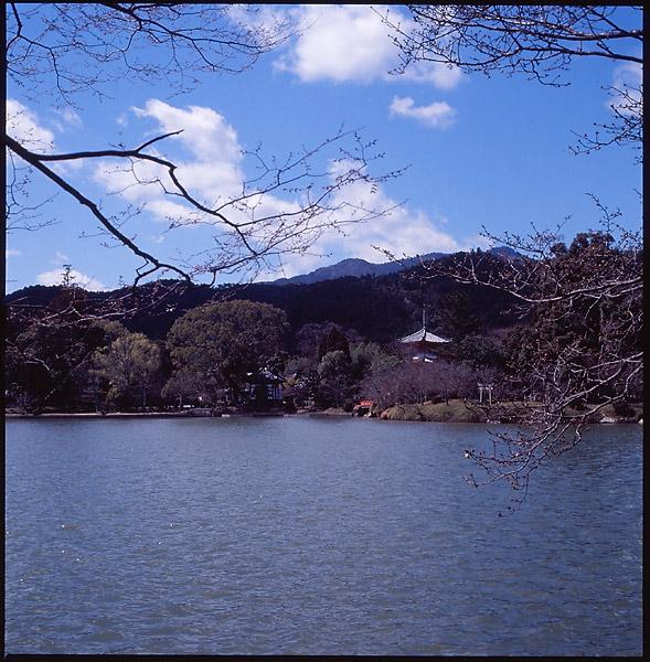 Osawa Pond II © Dennis Mojado