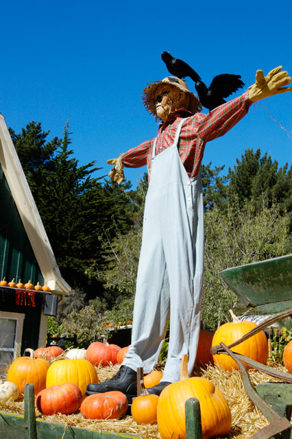 seven scarecrow activities for fall