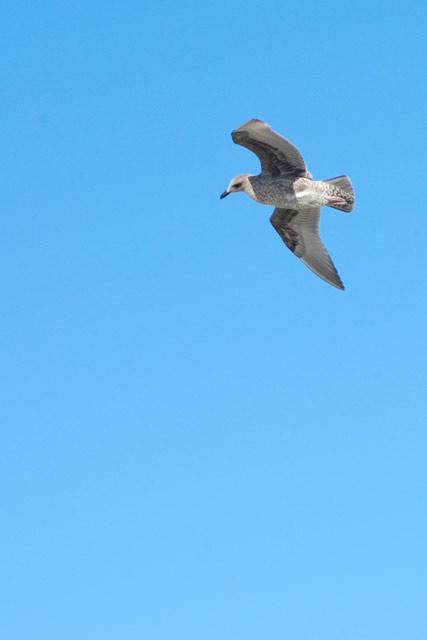Seagull © Dennis Mojado