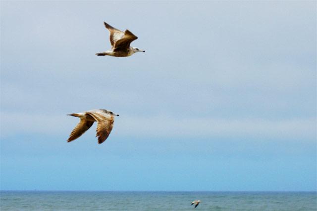Seagulls © Dennis Mojado