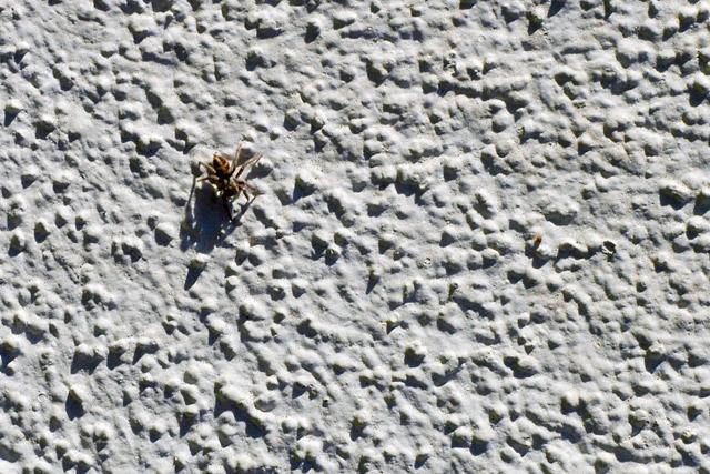 Spider Stucco © Dennis Mojado