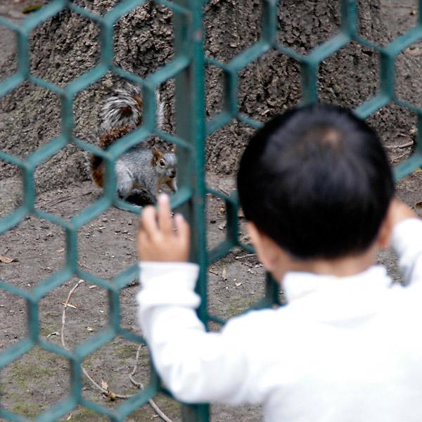 Squirrel Kid © Dennis Mojado
