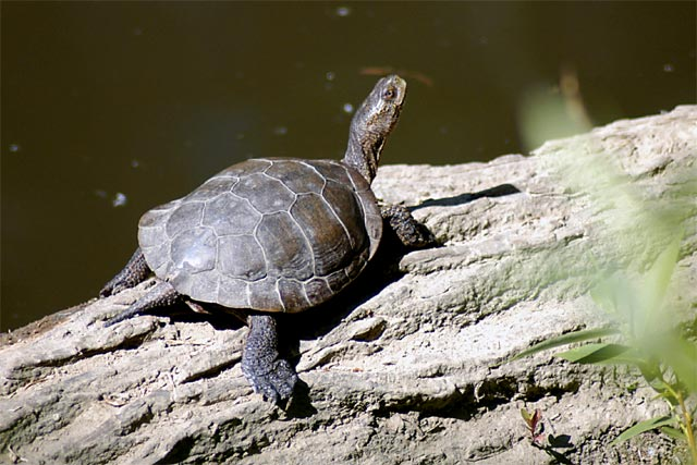 Turtle log © Dennis Mojado