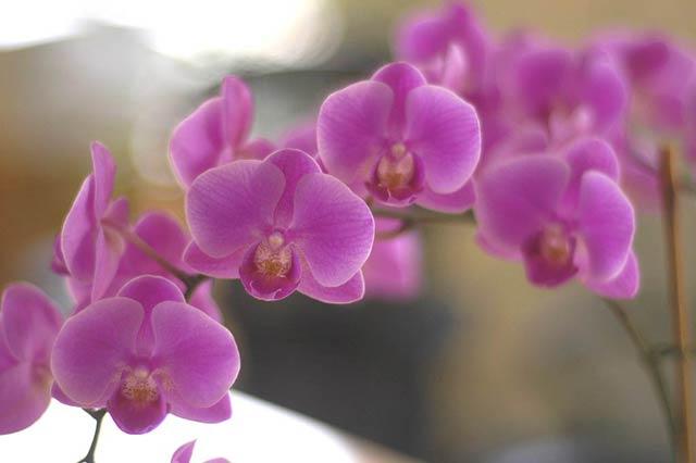 Orchid © Dennis Mojado
